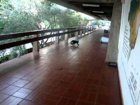 UEL Macaco Aprontando No CCE UNIVERSIDADE ESTADUAL DE
