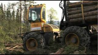 Forwarders El-Forest - Story