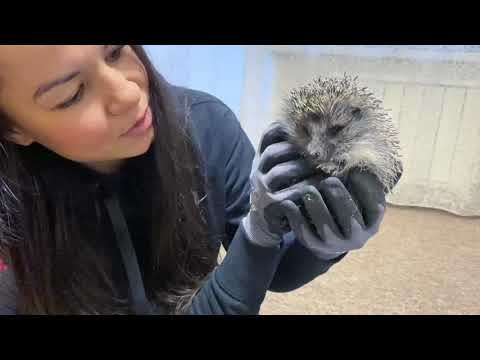 Black Leopard Luna tries on a jumpsuit and meets hedgehog