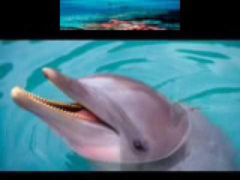 Dolphin Spirit 1 -  peace musique de F. Amathy. Relaxation - Vangelis/kitaro ? dauphin