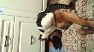 Кот любит собаку