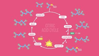 Download CITRIC ACID CYCLE SONG | Science Music Video Mp3 and Videos