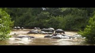 Ode aan het nijlpaard
