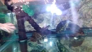Turtle magic
