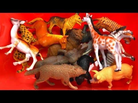 Learn Wild Zoo Animals and Farm Animals Names in English 야생 동물원 동물 및 농장 동물 이름 알아보기 영어 한국어