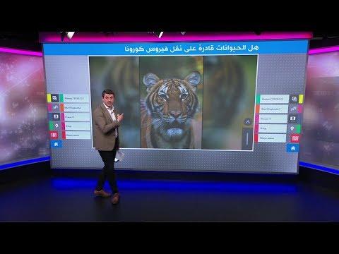 نمر وقط وكلب – أي حيوانات عرضة لفيروس كورونا؟  - نشر قبل 2 ساعة