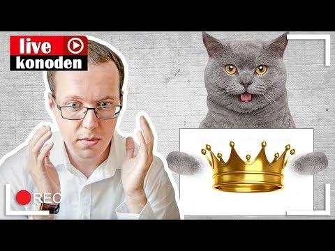 Без кота и жизнь не та! Жить с котом британцем - каково это?