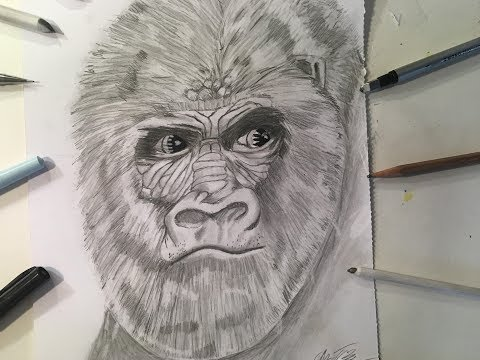 How to Draw a Realistic Gorilla Head (2017)- Pencil Drawing- ZArtwork