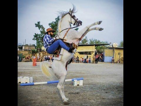 Salhiya Group Horse Show 31 March 17