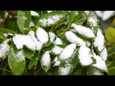 Привет от зимы: Иваново накрыло первым снегом