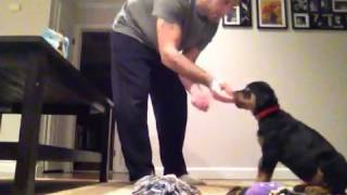 11 week old Rottweiler puppy training