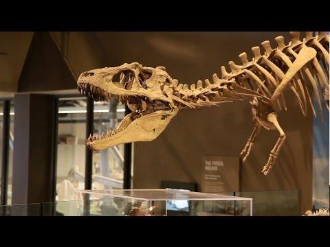 Discover Dinosaur Utopia: Utah