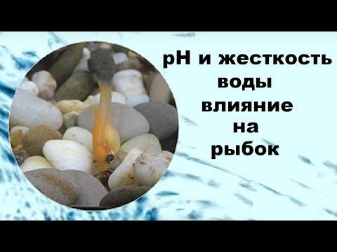 Вопрос: Каким органом рыбы воспринимают направление и силу тока воды?