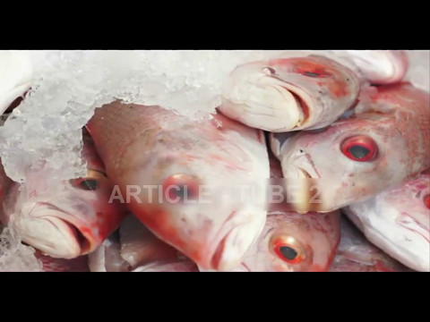 The Best Way To Store Fish In The Refrigerator