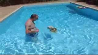 Charlie's Summer Holiday - Shih Tzu Dog - Surfing - Swimming And Jumping In Pool -