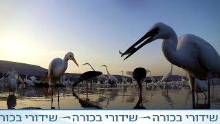 זן נדיר - עופות נודדים
