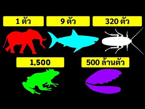 สัตว์ชนิดไหนที่มีลูกมากที่สุดในครั้งเดียว