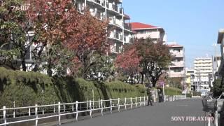 4K動画とフルHD動画(SONY FDR-AX100) フルハイビジョン 検索動画 10