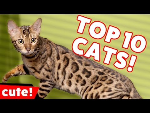 Top 10 Funniest Cat Videos Weekly Compilation November 2016 | Kyoot Animals