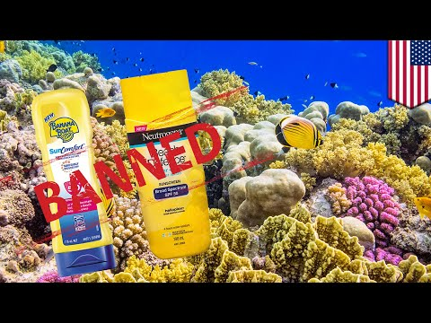 Avoid this kind of sunscreen to protect coral reefs - TomoNews