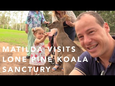 Matilda visits Lone Pine Koala Sanctuary