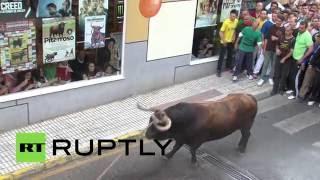 Бык забодал троих человек на традиционном фестивале в Испании