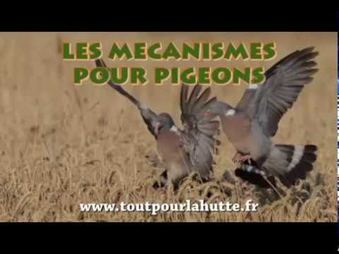 les m canismes pour chasser le pigeon youtube. Black Bedroom Furniture Sets. Home Design Ideas