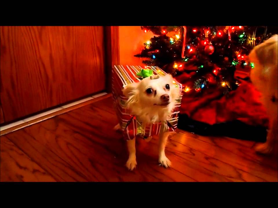 How To Make A Homemade Christmas Costume For Your Dog & How To Make A Homemade Christmas Costume For Your Dog - YouTube