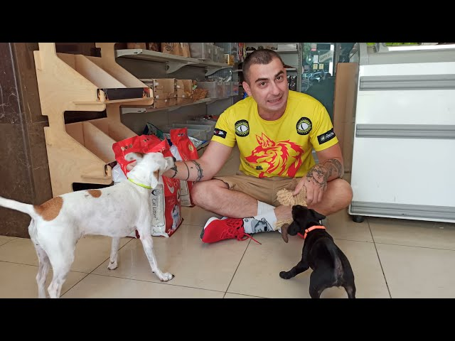 Νέος σκύλος | Ταξίδι και αγώνες Σλοβακία | Storytime (mplah mplah)