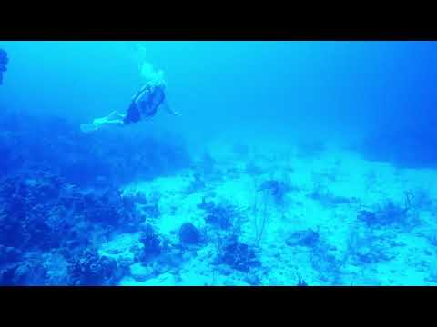 Grand Cayman 2018 | Kelly's Sea Turtle imitation