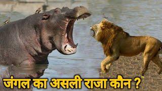 जंगल का असली राजा कौनLion Facts शेरों से जुडे़ 15 आश्चर्यजनक तथ्य और जानकारी  Lion Information Hindi