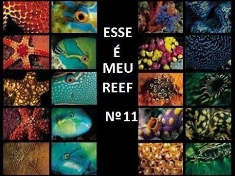 Aquário Marinho - Sem Grana - Esse é meu Reef nº11