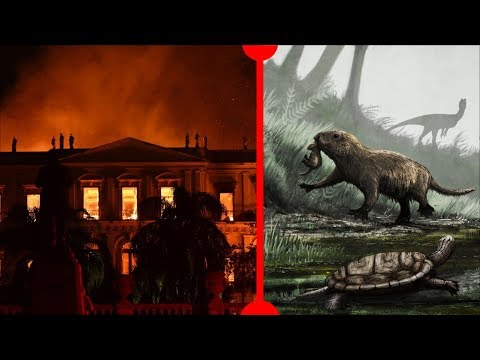 Brazil Museum Destroyed & Ancient Baby Mammals - 7 Days Of Science