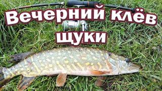 Вечерний клёв щуки На эту приманку легко поймать разную рыбу Рыбалка на спиннинг