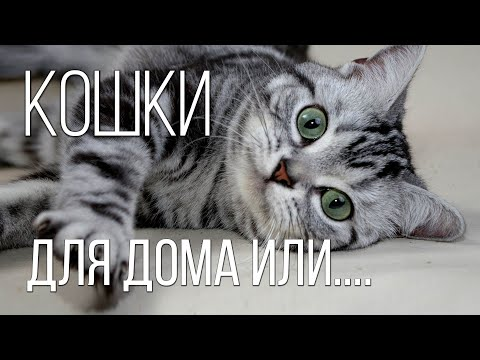 ТОП лучших пород КОШЕК: Самые красивые, любимые и домашние породы кошек | Интересные факты о кошках