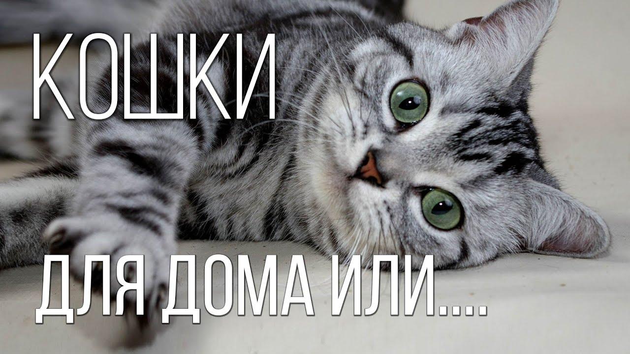 ТОП лучших пород КОШЕК: Самые красивые, любимые и домашние породы кошек   Интересные факты о кошках