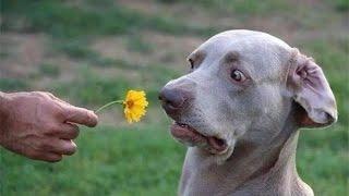 Cười vỡ bụng với những khoảnh khắc hai hước động vật.