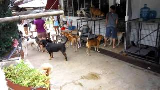 Dogs in Singapore (Pasir Ris Farmway 1)