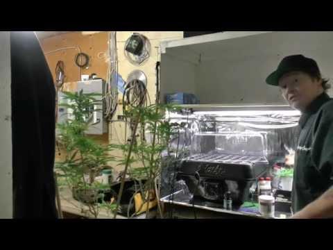 Cannabis Cloning Made Easy Turbo Kloner vs Peat Pellets