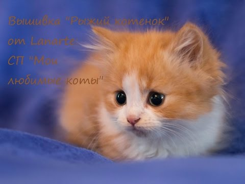 Вышивка крестом любимый котенок