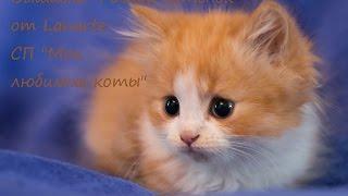 """Вышивка """"Рыжий котенок"""" от Lanarte: СП """"Мои любимые коты"""""""