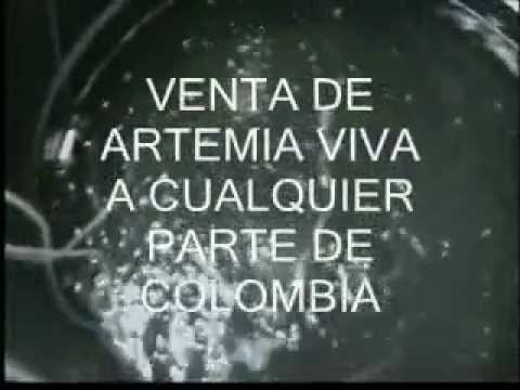 Artemia salina alimento vivo para sus peces youtube for Artemia para peces