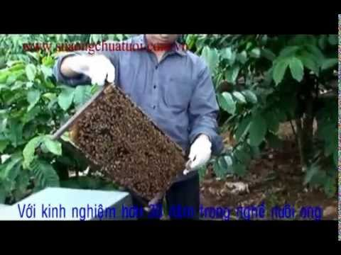 Cách lấy sữa ong chúa - Karplus.vn