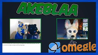 They are all SO FLUFFY | Best Of FURRY OMEGLE NIGHT 2| Akeban