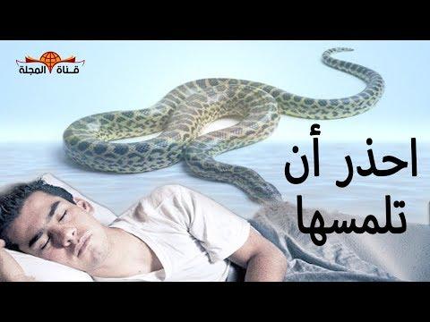 هل تعلم لماذا نهى النبي عن قتل ثعبان البيوت قبل انذاره ثلاث ؟ احذر أن تقترب منهم !!