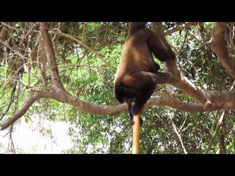 Dschungelcamp für Homöopathen (HD)