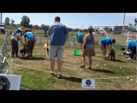 2014 Marysville Poochapalooza - Seattle FlyDogs Flyball exhibition