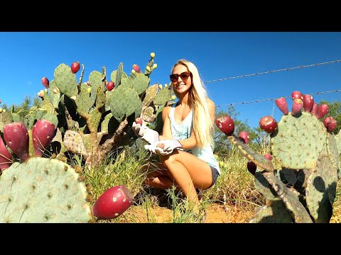 COOKING CACTUS! *Eating The Prickly Pear*