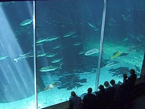 Two Oceans Aquarium, Waterfront, Cape Town - South Africa Travel Channel