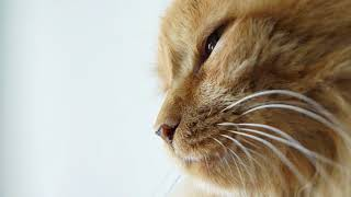 Почему у котов мокрый нос? Зачем коту мокрый нос?